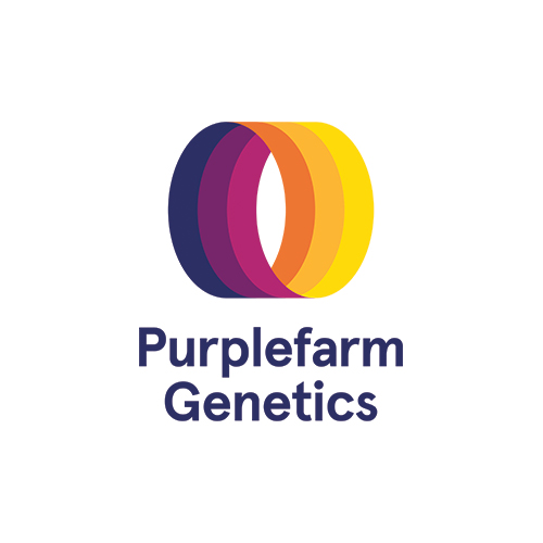 Purplefarm Genetics